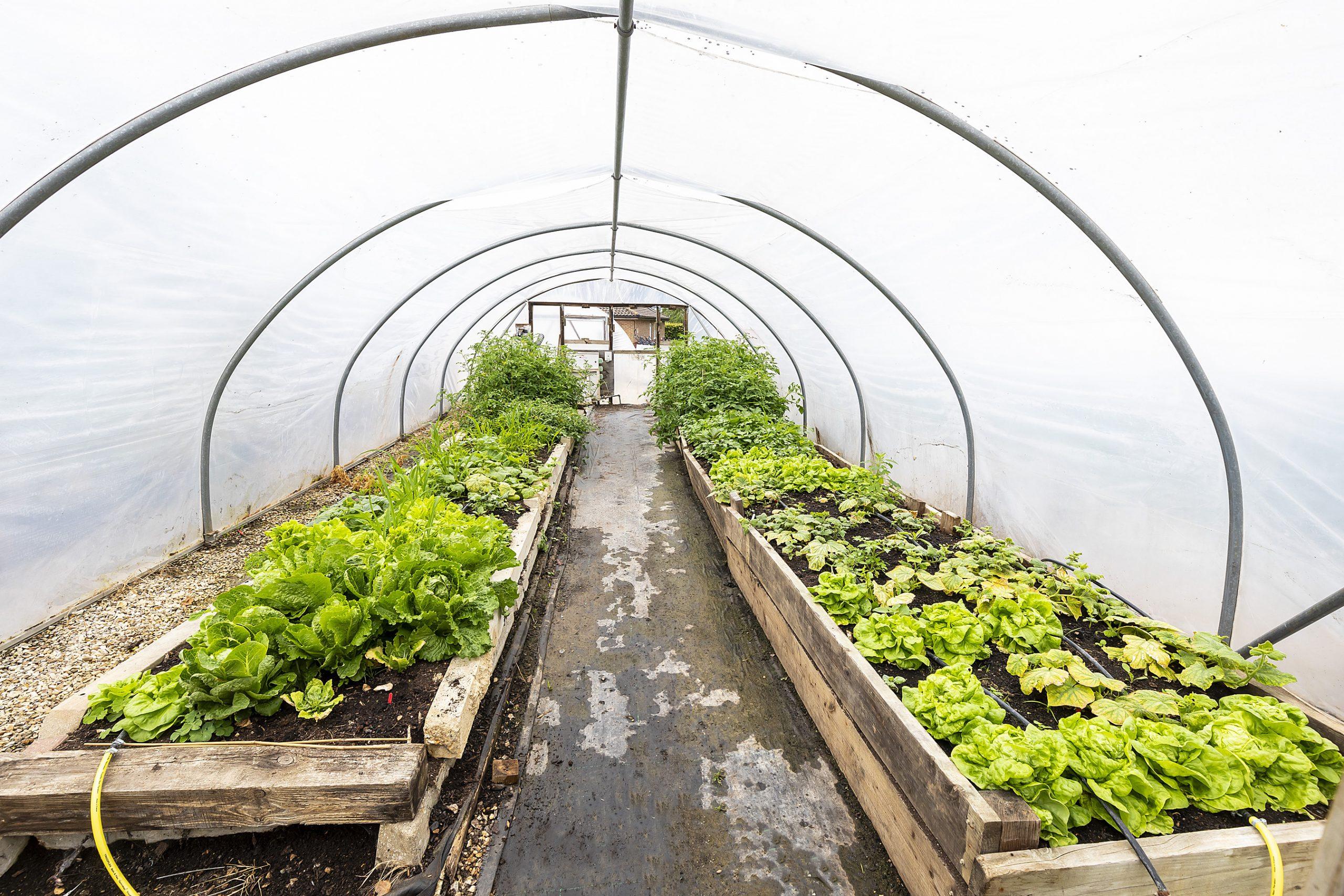 Horticulture polytunnels at Sparsholt College
